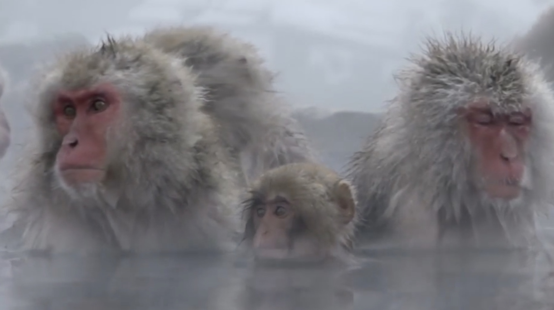Snow Monkey Spa