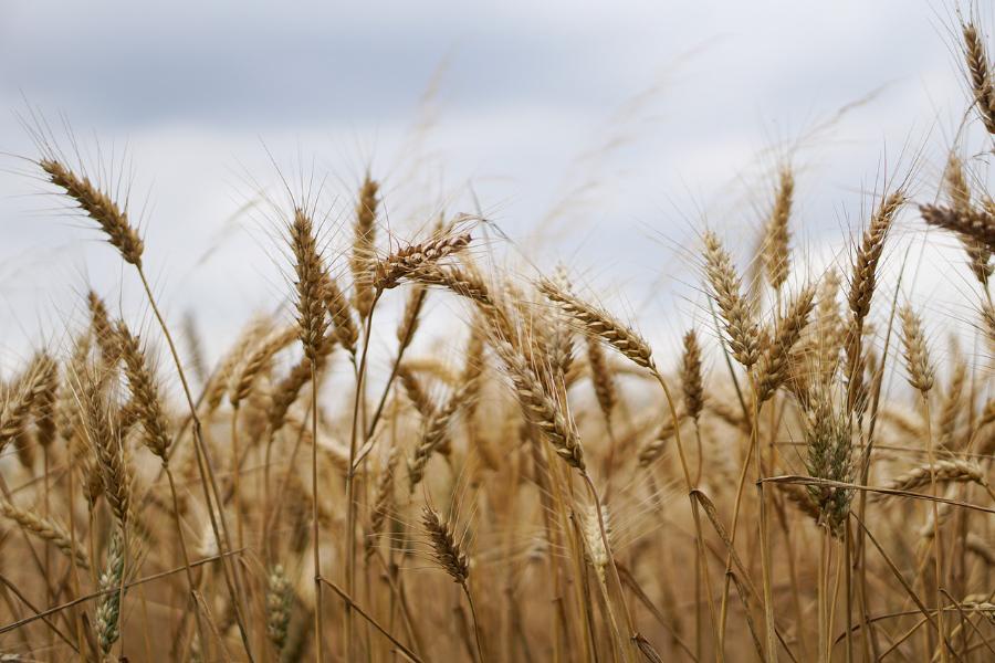 Acellus Agriculture I