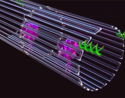Technology Spotlight: DNA Nanobots Find and Destroy Cancer